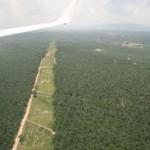 champs-palmiers-huile